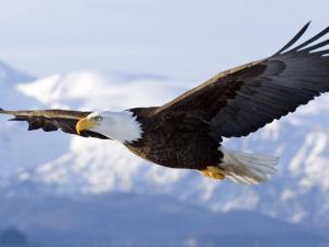 Eagle-E